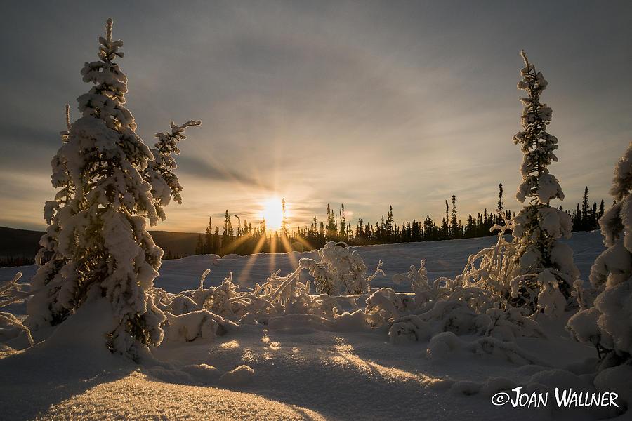 Alaska Photograph - Winter Sunburst and Halo by Joan Wallner
