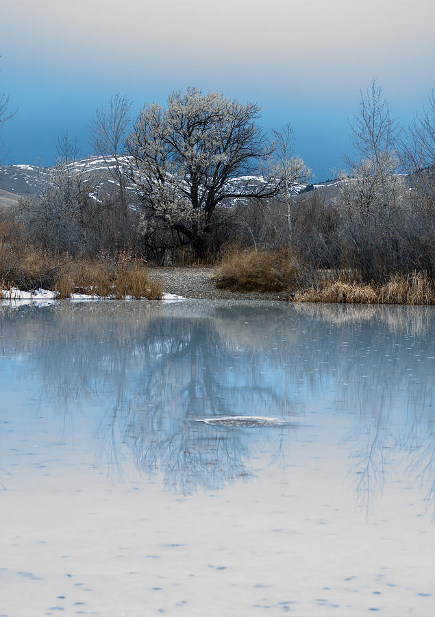 Fran Photograph - Winter Taking Hold by Fran Riley