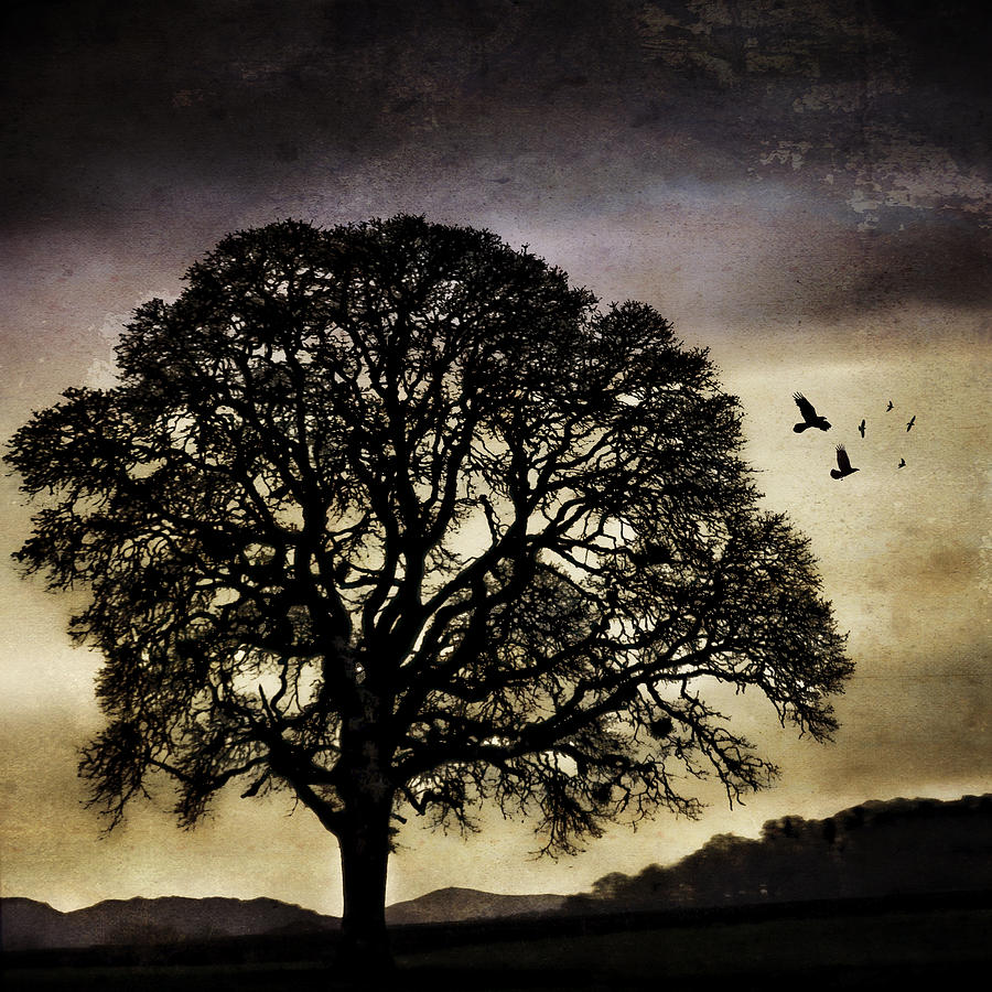Oak Photograph - Winter Tree And Ravens by Carol Leigh