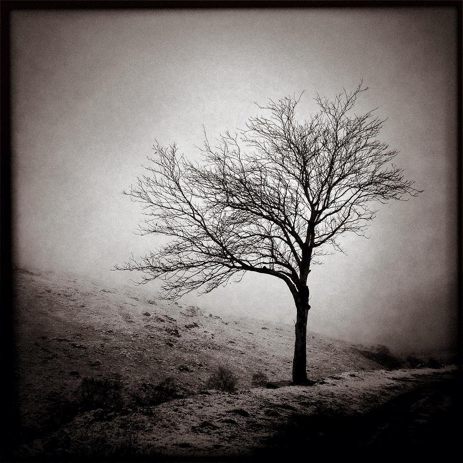 Glen Etive Photograph - Winter Tree by Dave Bowman
