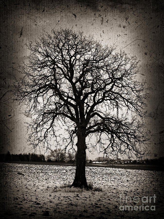 Lonely Photograph - Winter Tree by Elena Elisseeva