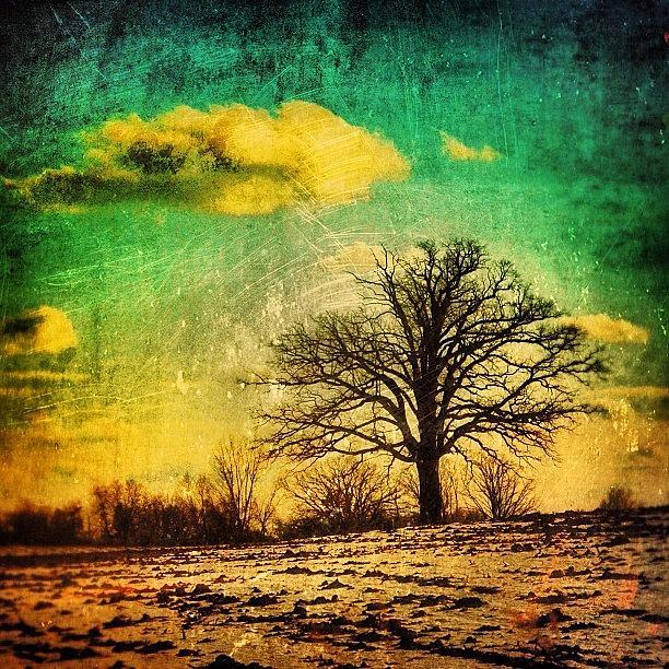 Clouds Photograph - Winter Tree by Jill Battaglia