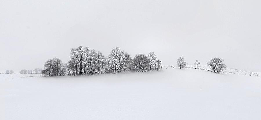 Winter Photograph - Winter Tree Line In Indiana by Julie Dant