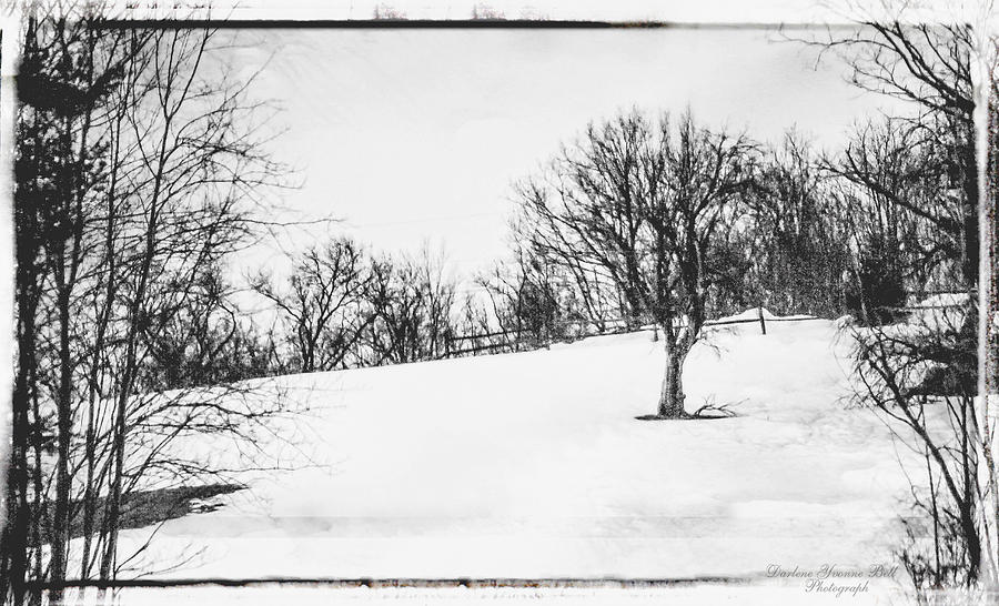 Trees Photograph - Winter Tree On Hill by Darlene Bell