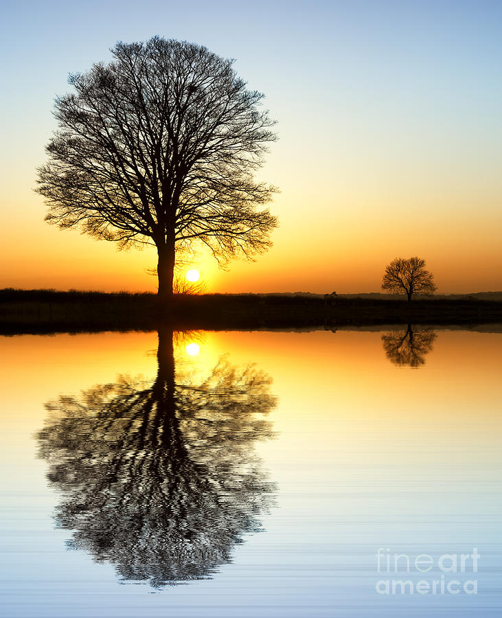 Oak Photograph - Winter Tree Reflections by Tim Gainey