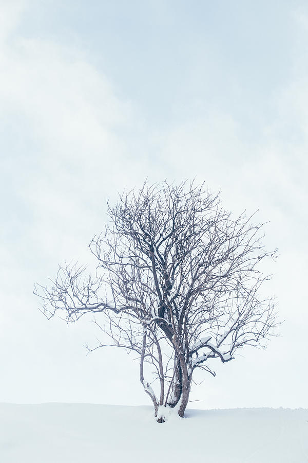 Nobody Photograph - Winter Tree by Soren Egeberg