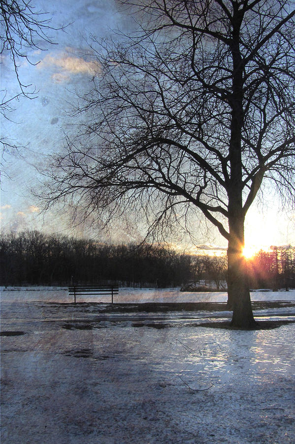 Winter Digital Art - Winter Tree Sunset by Anita Burgermeister
