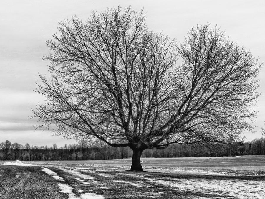 Snow Photograph - Winter Tree by Susan Desmore