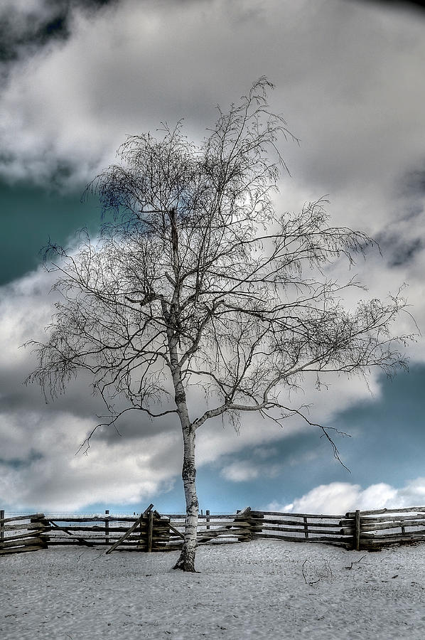 Tree Photograph - Winter Tree by Todd Hostetter