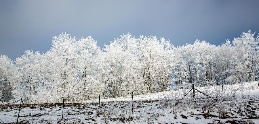 Snow Photograph - Winter Treeline Panorama by John Haldane