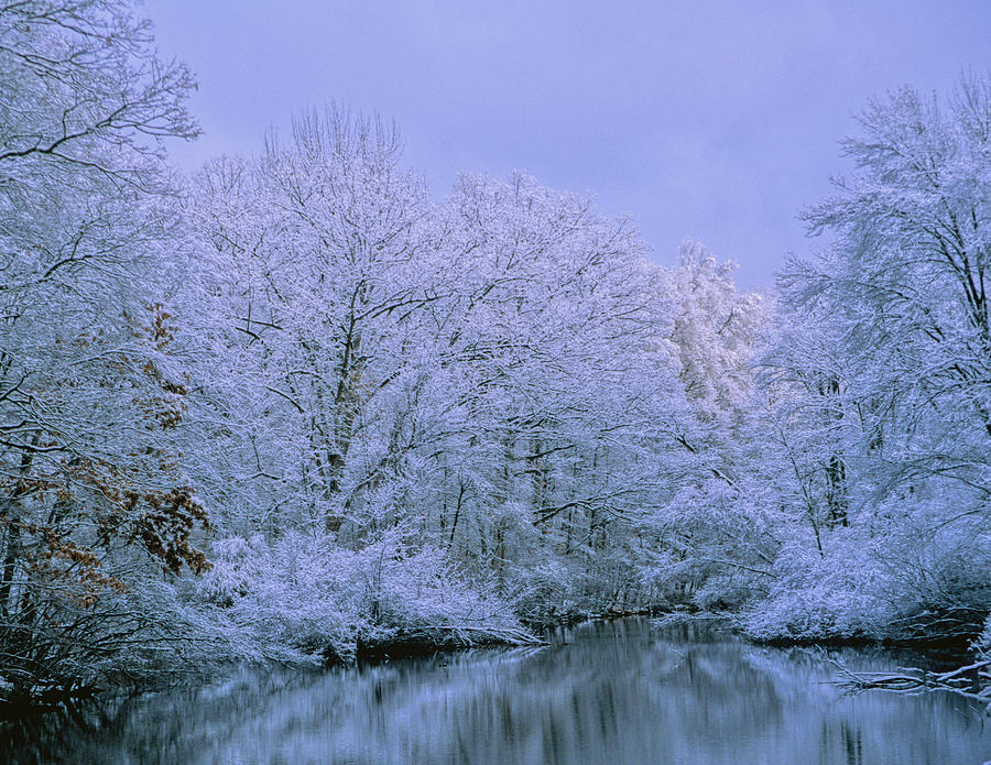 Landscape Photograph - Winter Trees by Carolyn Smith