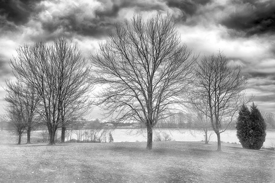 Nature Photograph - Winter Trees by Howard Salmon