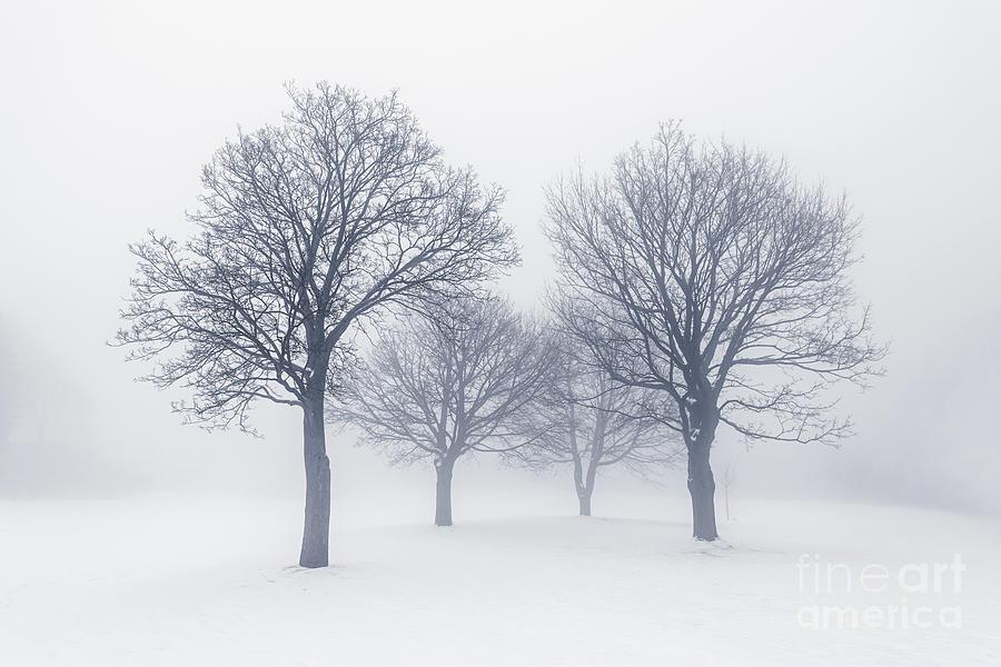 Winter Trees In Fog Photograph By Elena Elisseeva