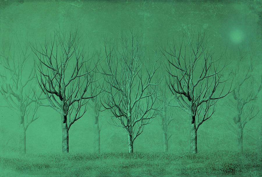 Trees Digital Art - Winter Trees In The Mist by David Dehner