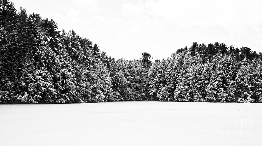 Vermont Photograph - Winter Trees Mink Brook Hanover Nh by Edward Fielding
