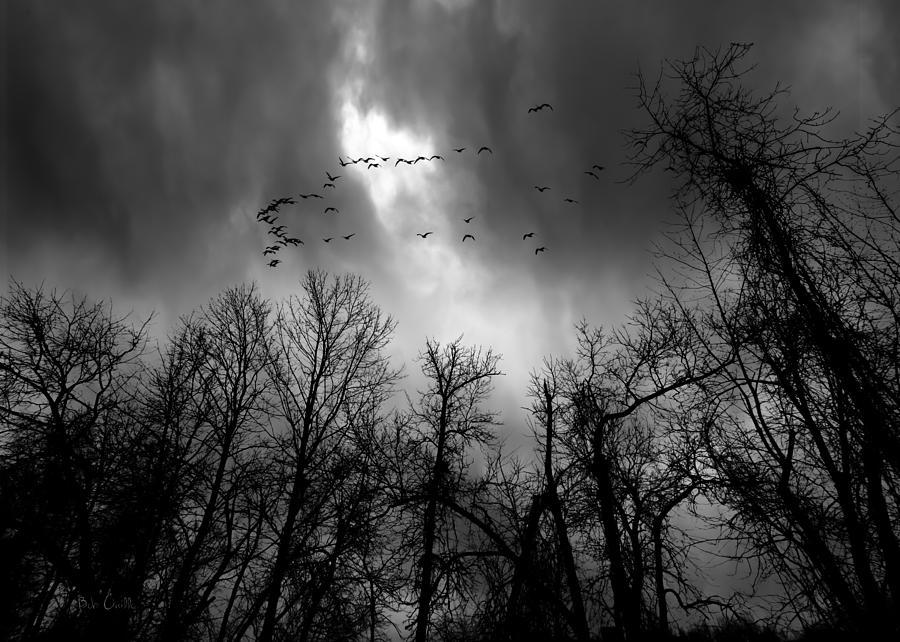 Tree Photograph - Winter Trees Moving Sky by Bob Orsillo