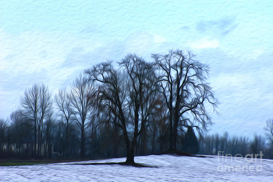 Trees Digital Art - Winter Trees by Nur Roy