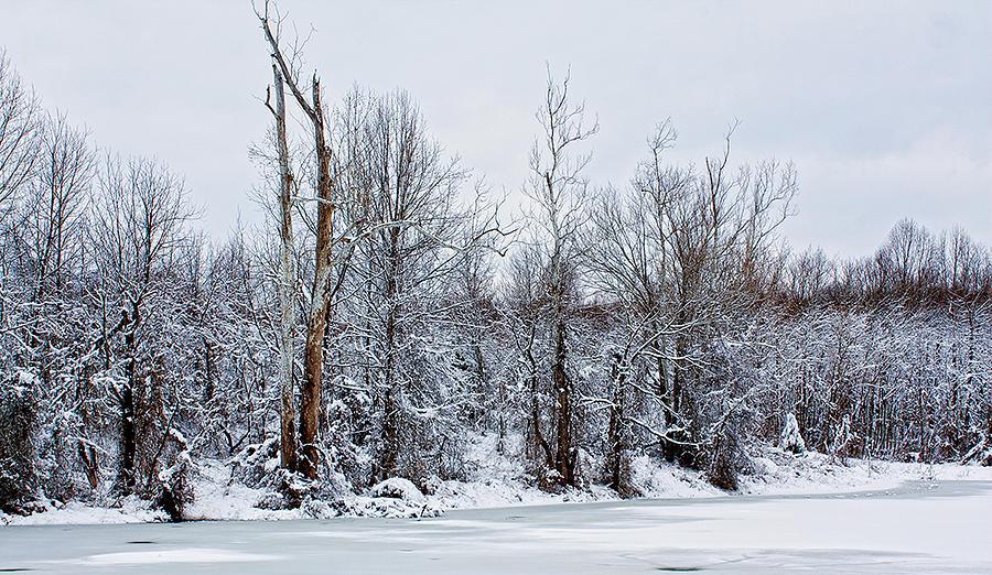 Winter Photograph - Winter Trees - Sydney Tran by Sydney Tran