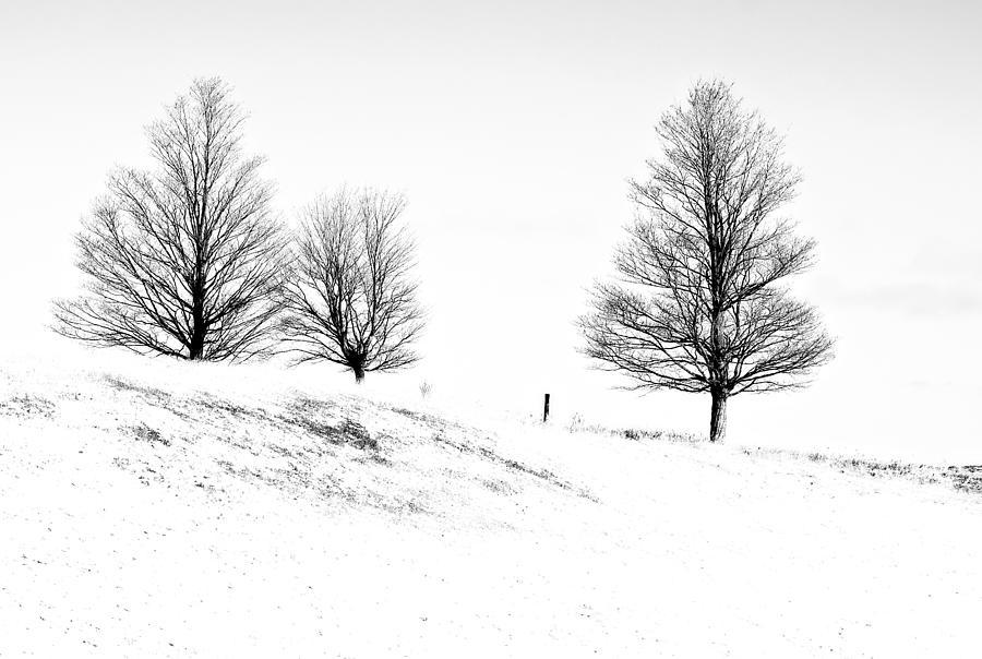 Trees Photograph - Winter Trinity Infrared by Steve Harrington