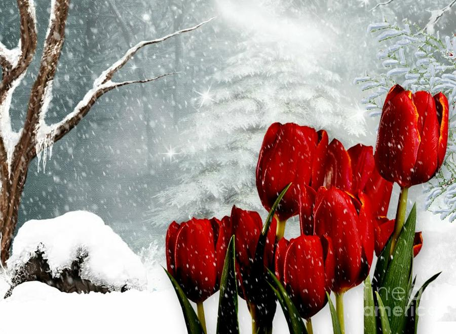 Red Tulip Mixed Media - Winter Tulips by Morag Bates