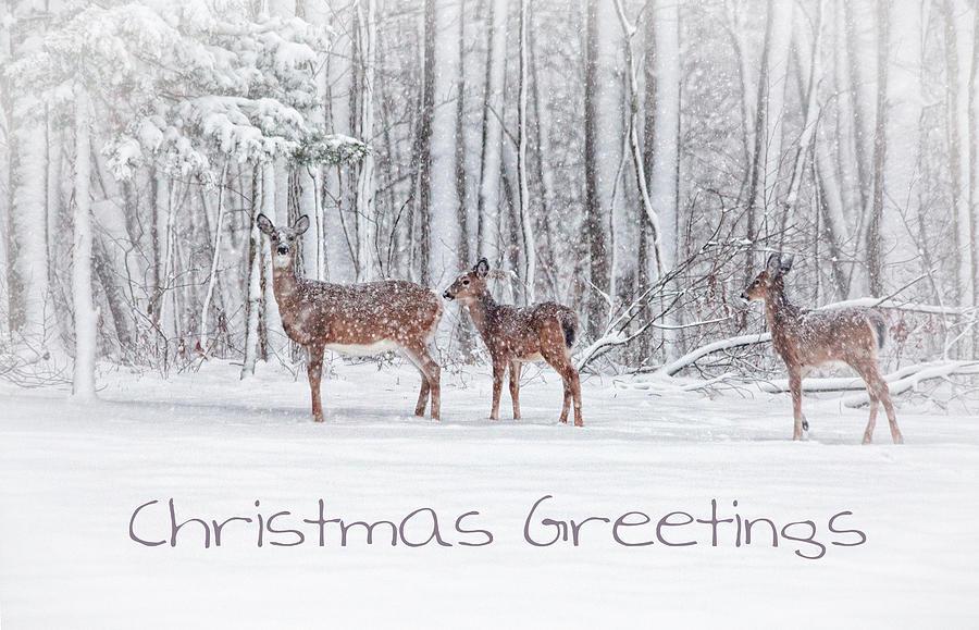 Deer Photograph - Winter Visits Card by Karol Livote