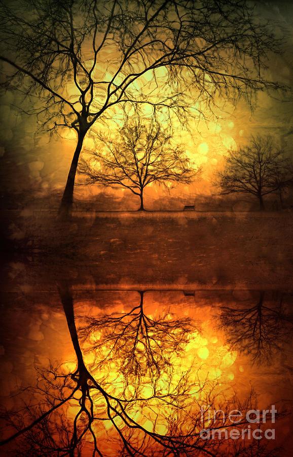 Trees Photograph - Winter Warmth by Tara Turner