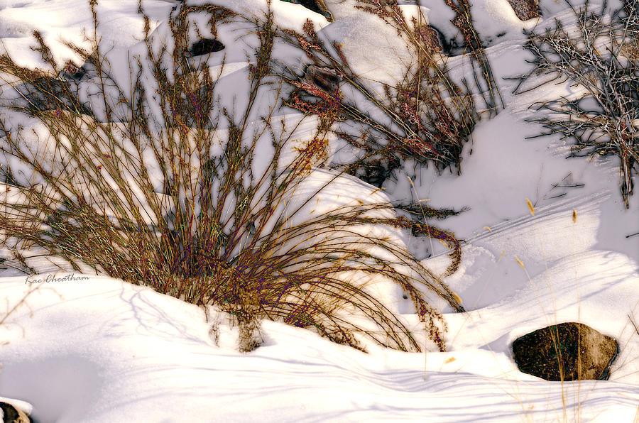 Wintertime Photograph - Winter Weeds by Kae Cheatham