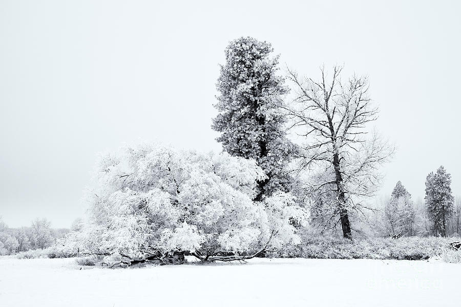 Winter Photograph - Winter White by Mike  Dawson