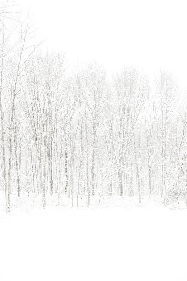 Minimal Photograph - Winter White Out by Karol Livote
