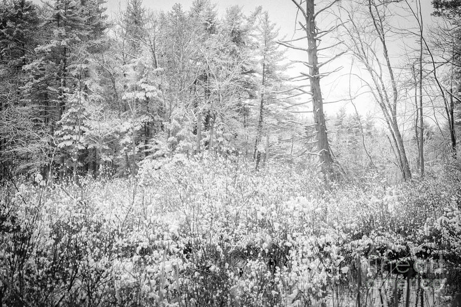 Snow Photograph - Winter Whites by Sue OConnor