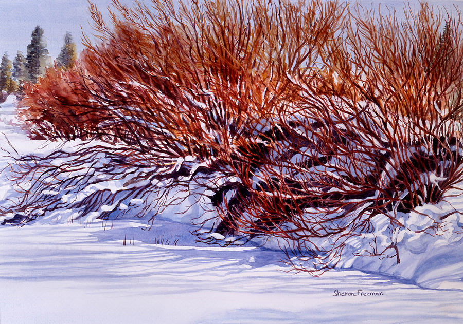 Winter Painting - Winter Willows by Sharon Freeman