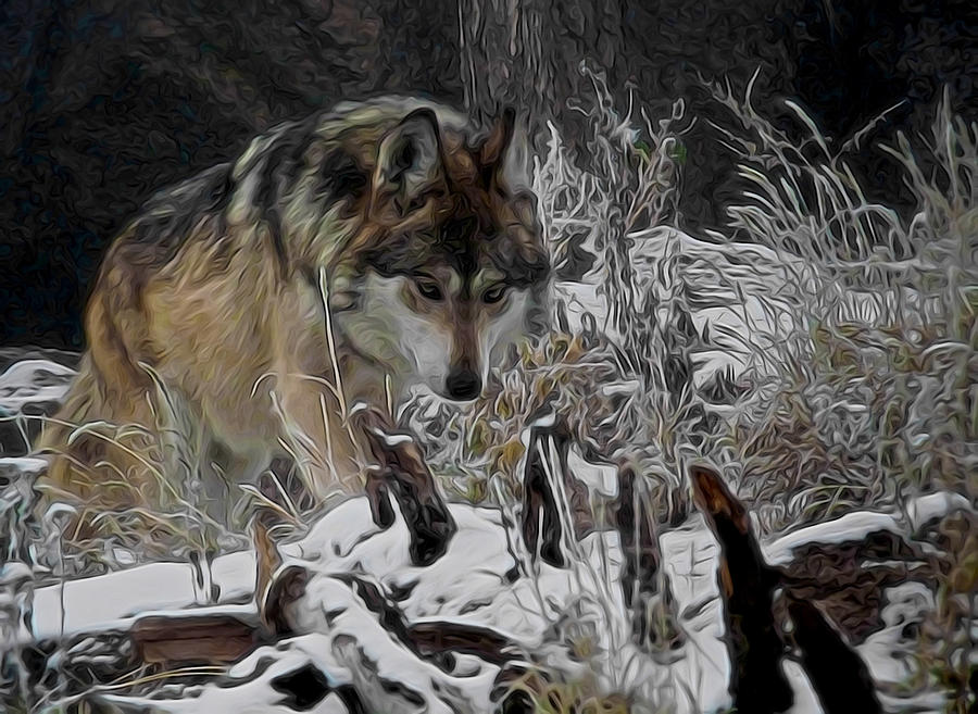 Wolf Digital Art - Winter Wolf Digital Art by Ernie Echols
