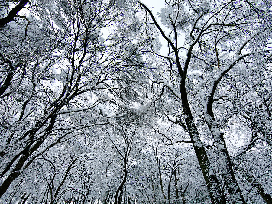 Winter Photograph - Winter Wonder by Jeff Klingler