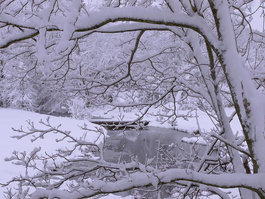 Winter Scene Photograph - Winter Wonderland 2 by Mike McGlothlen