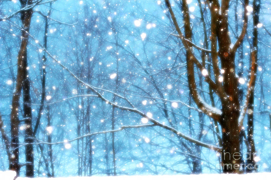 Snow Trees Tree Landscape Nature Beautiful Peaceful falling Snow Snowing Snowflake Snowflakes Holiday Christmas Hanukkah Photograph - Winter Wonderland by Brenda Schwartz