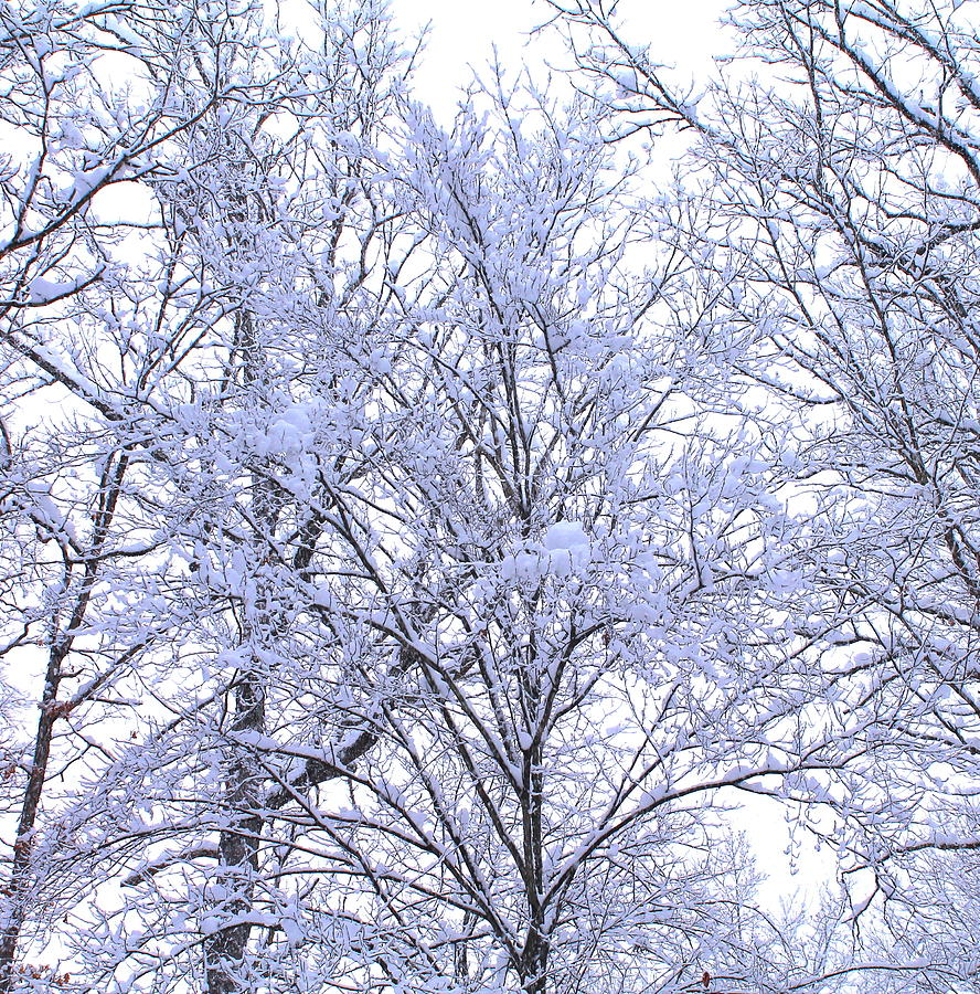Trees Photograph - Winter Wonderland by Candice Trimble