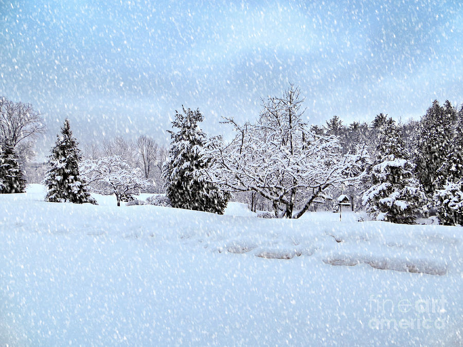 winter wonderland is a photograph by gwen gibson which was uploaded on