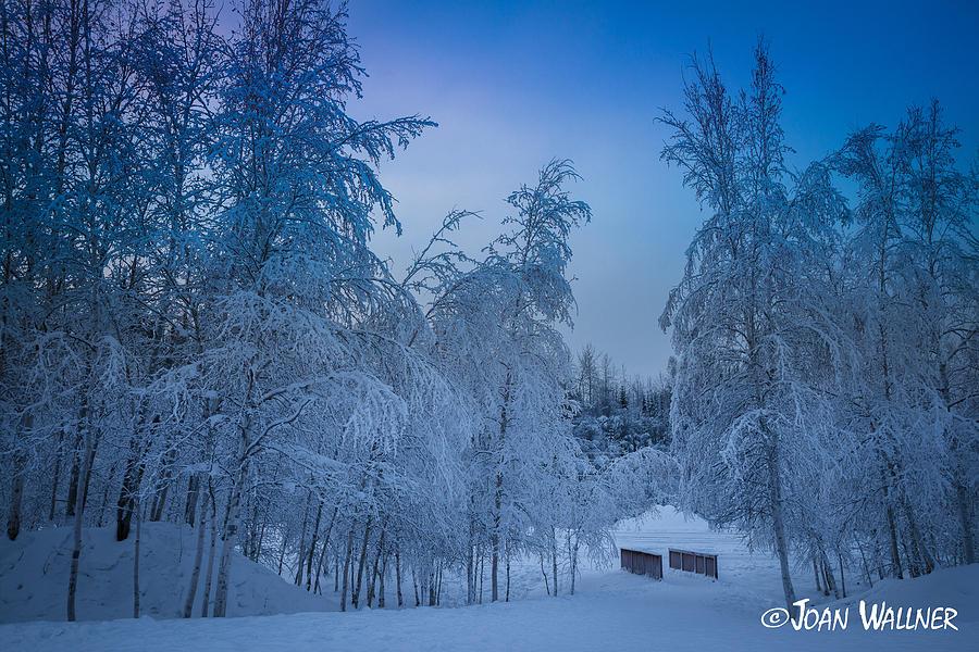 Alaska Photograph - Winter Wonderland by Joan Wallner