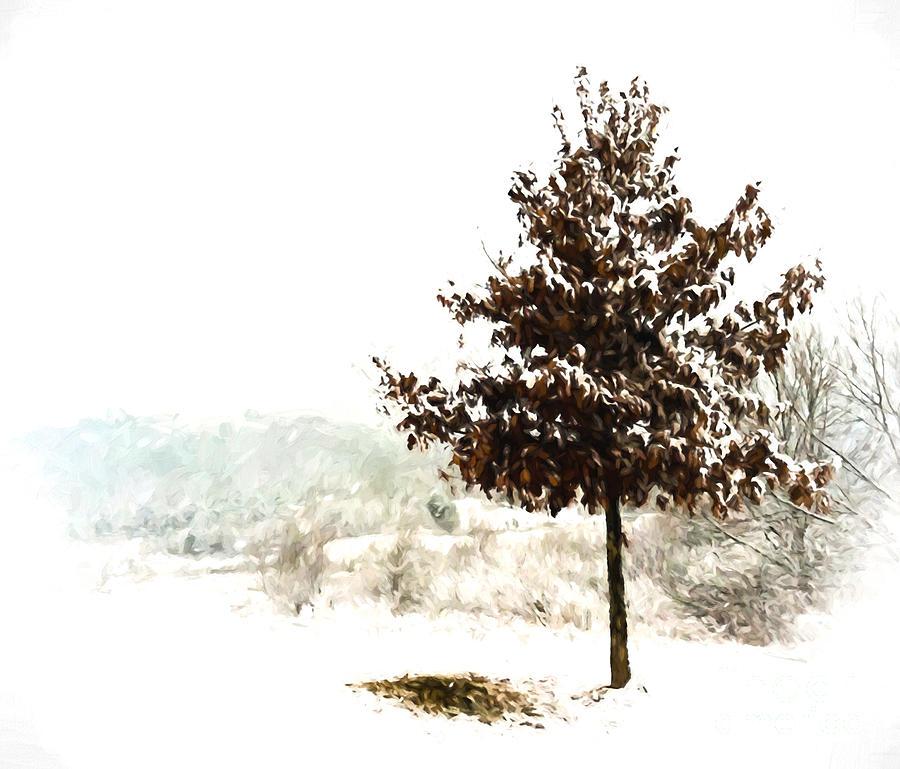 Snow Photograph - Winter Wonderland  by Kerri Farley