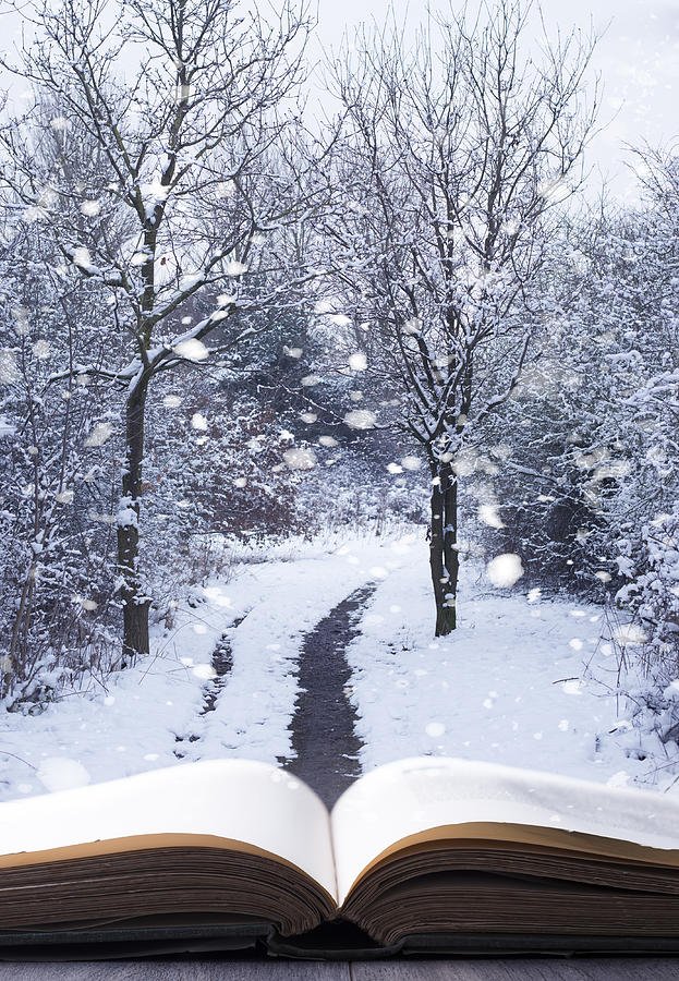 Open Photograph - Winter Woodland Book by Amanda Elwell