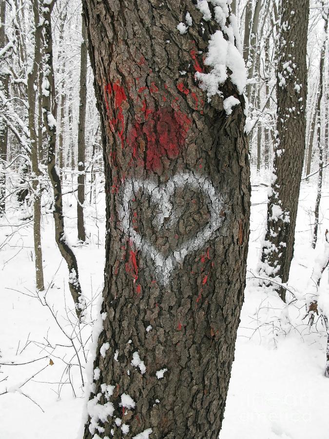Heart Photograph - Winter Woods Romance by Ann Horn