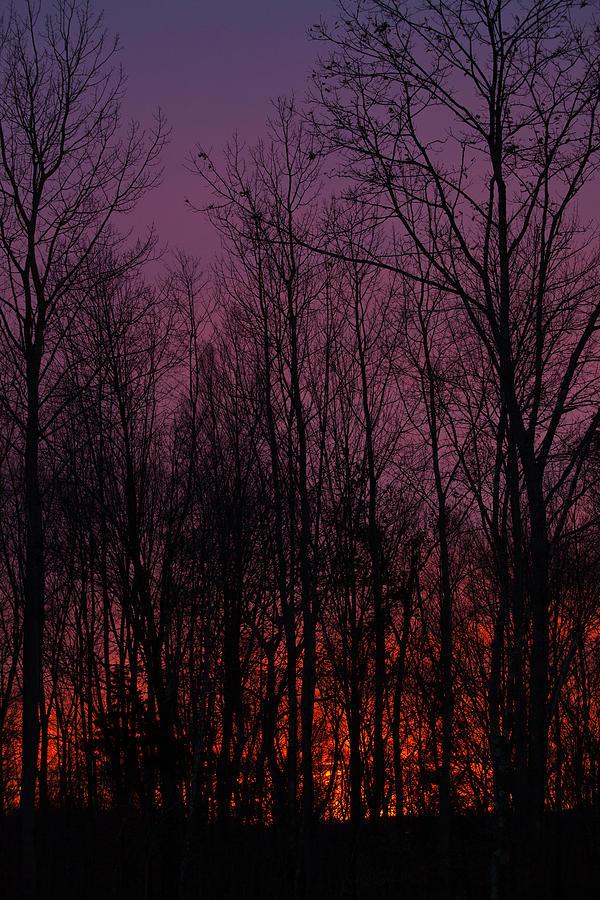 Sunset Photograph - Winter Woods Sunset by Karol Livote