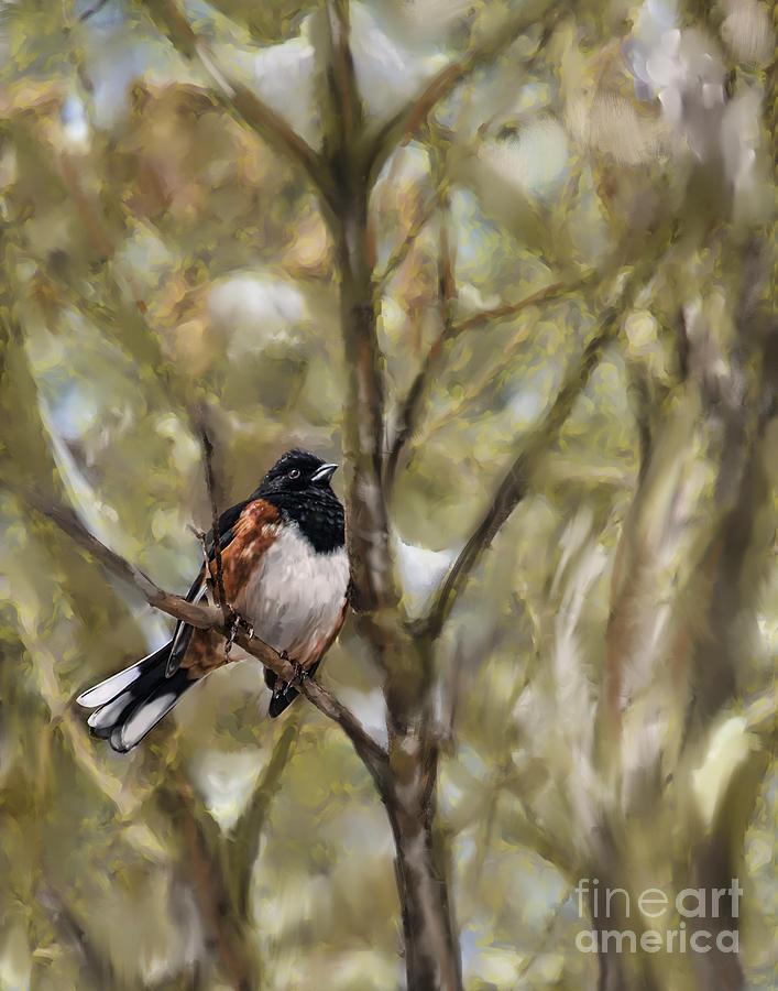 WinterBird by Louise St Romain