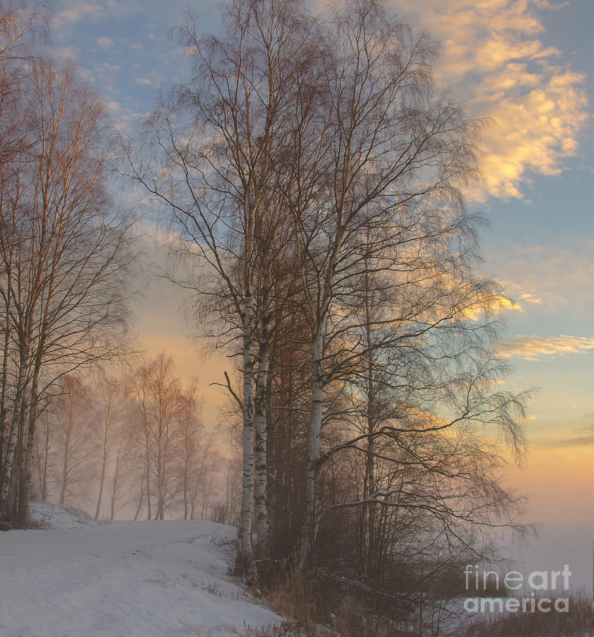 Landscape Photograph - Winterday by Sylvia  Niklasson