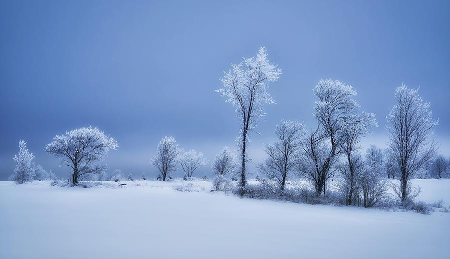 Winter Photograph - Winterland by Christian Duguay