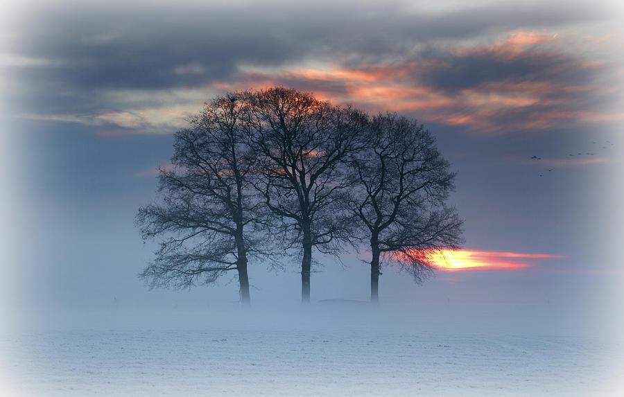 Winterlandscape Photograph by Dewollewei
