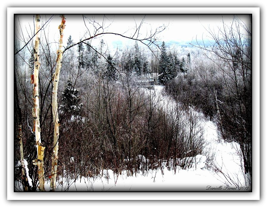 Snowy Trees Photograph - Winterlude by Danielle  Parent