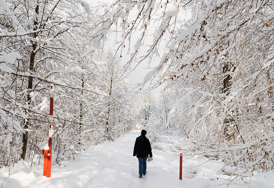 Winter Photograph - Winterly Forest With Snow Covered Trees by Matthias Hauser