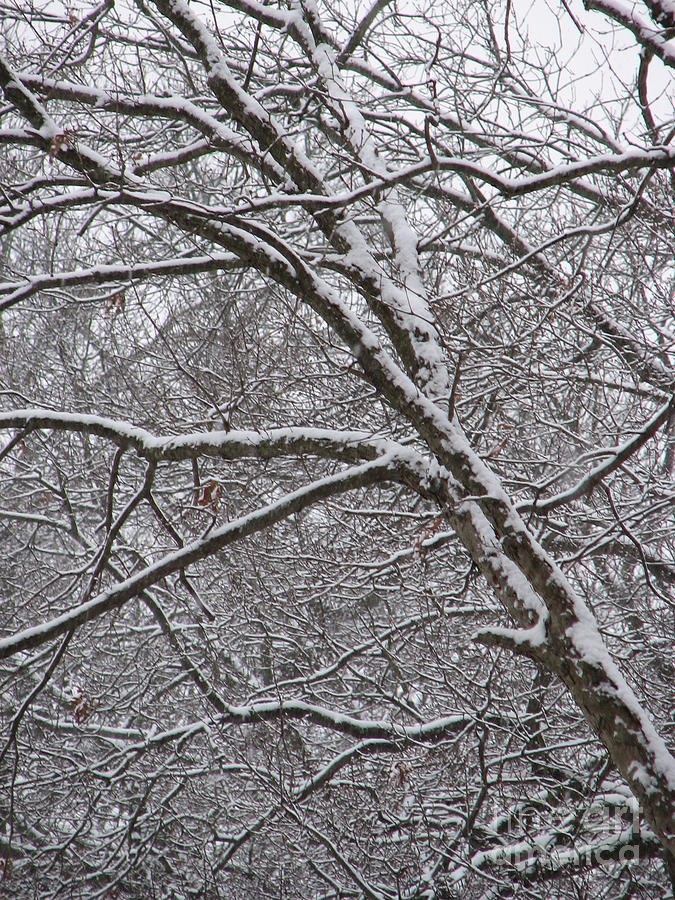 Tree Photograph - Winters Beauty by Roxy Riou