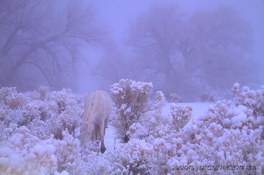 Wild Horses Photograph - Winters Blanket Of Snow  by Jeanne  Bencich-Nations